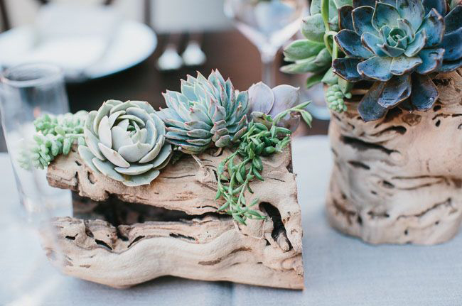 Great eye popping succulent photos for wedding ideas