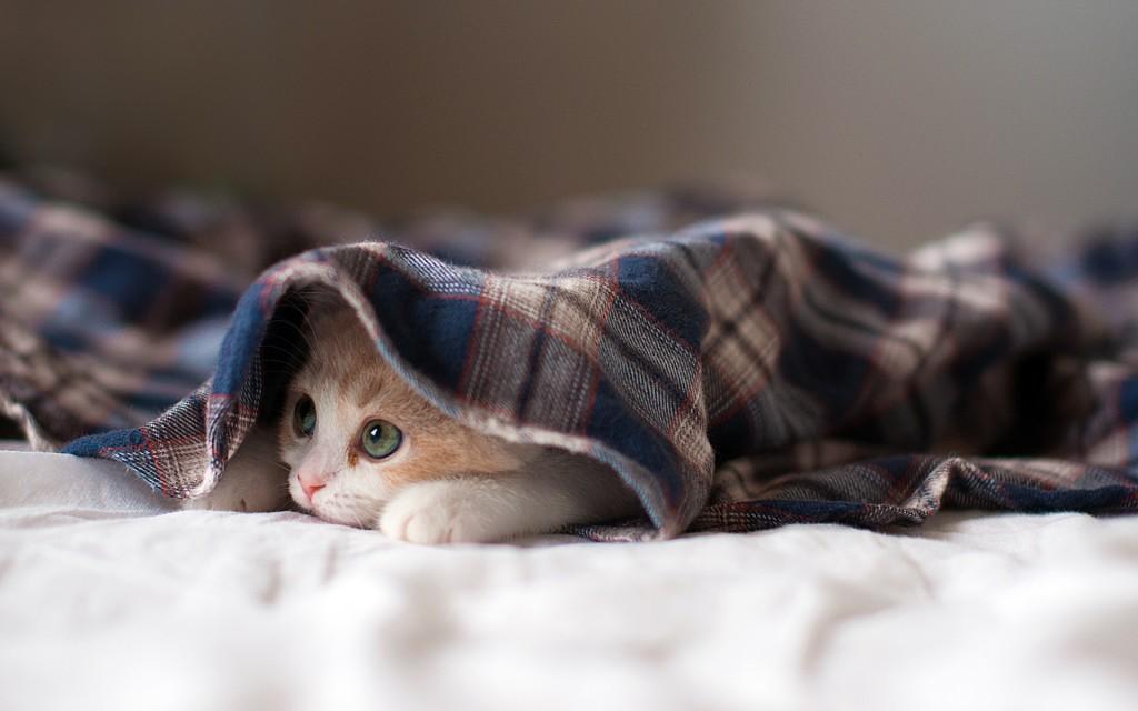 20+ Free Cute Cat HD Wallpapers , DesignMaz